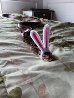 Funny pictures about Hopping Along That Bunny Trail. Oh, and cool pics about Hopping Along That Bunny Trail. Also, Hopping Along That Bunny Trail photos. Cute Baby Animals, Animals And Pets, Funny Animals, Snakes With Hats, Baby Snakes, Cage Hamster, Serpent Animal, Cute Reptiles, Cute Snake