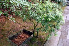 Portland Japanese Garden, Outdoor Furniture, Outdoor Decor, Park, Plants, Parks, Plant, Backyard Furniture, Lawn Furniture
