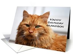 Grandson Happy Birthday, Orange Maine Coon Cat greeting card  http://www.greetingcarduniverse.com/grandson-birthday-cards/general/grandson-happy-birthday-orange-maine-677292?gcu=42967840600