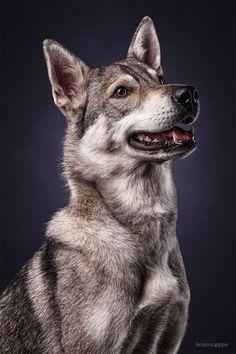 Dog Portraits 2 by Daniel Sadlowski