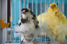 Canary Canary Birds, Pet Birds, Parrot, Fish, Serin, Animals, Feathers, Amor, Goldfinch