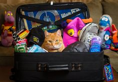 When packing for Disney World or Disneyland, we make a what to pack for Disney packing check-list of what we need to bring for the trip. For 2014, this includes some new items that we think people will really like. As fellow obsessive Disney fans, we're sure...