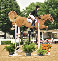 hunter jumperhorse equine photo image jump rider equestrian show competition dressage
