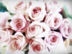 the magic of roses #flowers #roses