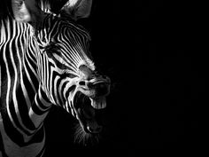 8 Intimate Animal Portraits That Will Stop You in Your Tracks - Photo by Boza Ivanovic  Read more: http://www.rd.com/slideshows/animal-portraits-boza-ivanovic/#ixzz38nV6qPzW