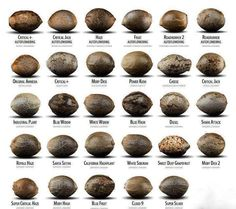 Different Strains of Cannabis Seeds