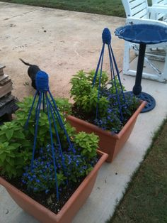 pots I filled with blue lobelia and blue balloon flowers (yet to bloom) along with a trellis I made with old bamboo sticks, twine and blue opaque stain for a pop of color in our garden