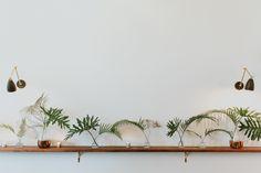 modern minimal greenery on the bar ledge
