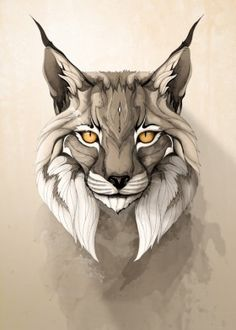 lynx iberian pardinus animal