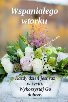 Good Morning Funny, Morning Humor, Cabbage, Table Decorations, Vegetables, Disney, Polish, Pictures, Cabbages
