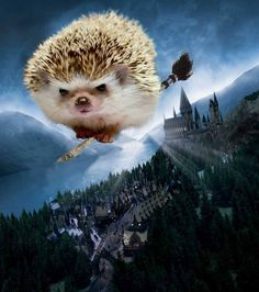 Princess Pricklepants took to flying her broom pretty quickly. Still, she actually preferred studying herbology to Quidditch practice.