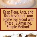 Keep Fleas, Ants, and Roaches Out of Your Home For Good With These 12 Amazing, Simple Methods