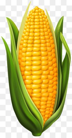 Yellow corn illustration, Corn on the cob Maize , Corn transparent background PNG clipart - PNG images Fruit And Veg, Fruits And Vegetables, Corn Drawing, Vegetable Drawing, Vegetable Painting, Popcorn Seeds, Vegetables Photography, Fruits Drawing, Yellow Corn