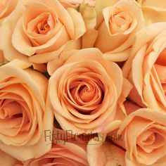 FiftyFlowers.com - Alejandra Perfect Peach Rose