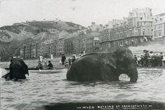 bathing at aberystwyth photographer? via ichabodhides