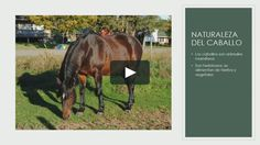 """This is """"FLIPPED by xabier urmeneta on Vimeo, the home for high quality videos and the people who love them. Flipped Classroom, Horses, Videos, Innovative Products, Group, Friends, Naturaleza, Animales, Horse"""