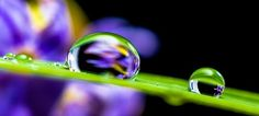 Free Image on Pixabay - Drop Of Water, Drip, Blade Of Grass Nikon D5200, What Is Water Cycle, Leaves Of Grass, Fotografia Tutorial, Water Droplets, Rain Drops, Photoshop Elements, Antalya, How To Know