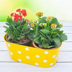 Turn your windows into a lush, mini-jungle with pretty packs of flowering plants. These space-saving planters are just right for a modest indoor garden. Terrace Garden, Indoor Garden, Indoor Plants, Outdoor Gardens, Growing Flowers, Planting Flowers, Planter Accessories, Garden Online, Free Plants