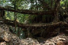 Living root bridge HS - Meghalaya - Wikipedia Limestone Caves, Sacred Groves, Shillong, Arunachal Pradesh, Northeast India, End Of The World, Capital City, Natural Wonders, Asia