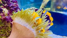 Sea Anemone, House Sitting, Great Barrier Reef, Your Pet, Photo Galleries, Exotic, Australia, Fish, Pets