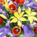 Flower Myspace Comments