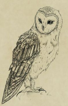 Zeichnung Tiere Owl Tattoos 56 Super Ideas The post Zeichnung Tiere Owl Tattoos 56 Super Id Owl Tattoo Drawings, Bird Drawings, Art Drawings Sketches, Animal Drawings, Owl Tattoos, Drawing Animals, Tattoo Owl, Lechuza Tattoo, Buho Tattoo