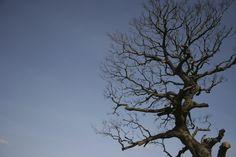 새만금을 바라보는 슬픈 나무.
