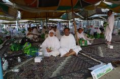 Arafah.. no hajj without arafah