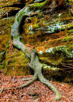 Seasonal Decor - Nature Prints - Harvest Decor - Autumn Decor - Fall Decor - Country Home Decor - Fine Art Photography - Wall Art Prints