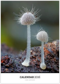«Fungi 2013-2014» de Steve Axford