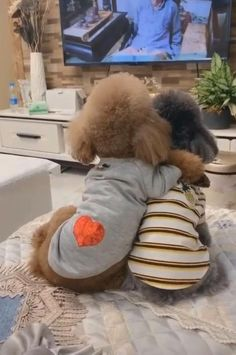 Cute Funny Dogs, Cute Funny Animals, Cute Baby Animals, Animals And Pets, Adorable Dogs, Small Animals, Cute Animal Humor, Cutest Dogs, Wild Animals