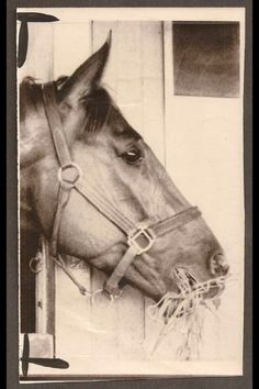Secretariat known to be one of the BEST horses in the world!