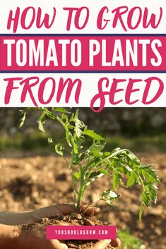 If you are looking for How to prune pepper and tomato plants for a great crop with gardening for beginners you've come to the right place. We have collect images about How to prune pepper and tomato plants for a great crop with gardening for beginner Growing Tomatoes From Seed, Types Of Tomatoes, Growing Seeds, Grow Tomatoes, Garden Tomatoes, Vegetable Garden For Beginners, Backyard Vegetable Gardens, Gardening For Beginners, Gardening Tips