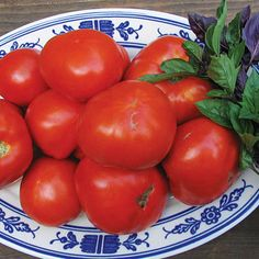 Want juicy, sun-ripened tomatoes a month sooner