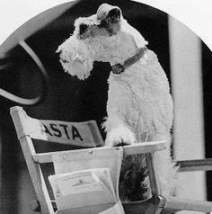 Asta the Dog--what a star