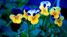 amazing spring flowers images #426263, flowers Photography Wallpapers