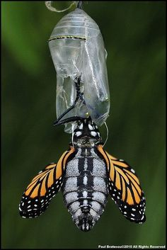 Emerging from Cocoon