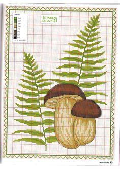 Mushrooms and Fern