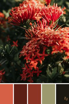 ZJ Colour Palette 477 #colourpalette #colourinspiration