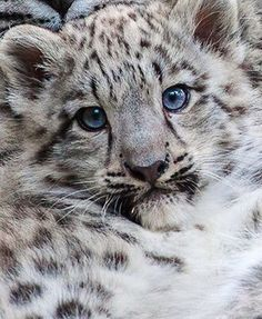 Nila - Jemma's leopard; comes to her when she's a baby and grows along with her
