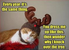 Makes me think of my sweet cousin Glenda.too funny! Funny Animal Pictures Of The Day - 25 Pics Funny Cute, The Funny, Hilarious, Funny Pics, Super Funny, Christmas Cats, Christmas Humor, Christmas Animals, Merry Christmas
