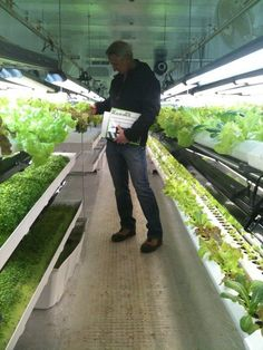 Space is no problem in a hydroponic shipping container