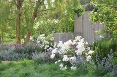 Rosas floribundas blancas y flores lilas.
