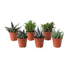 Decora tu exterior con macetas y plantas para terrazas - IKEA