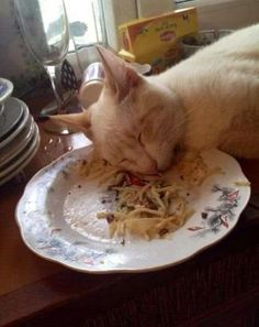 Food coma! - I've never seen a cat that tired lol