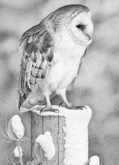 Barn Owl by Fran Meredith Clive (Clive Meredith)