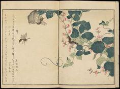 画本虫撰 「蝶 稀成年、 蜻蛉 一富士二鷹」     Ehon mushi erami (Picture Book of Selected Insects) about 1788.