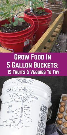 Grow Food In 5 Gallon Buckets - 15 Fruits & Veggies That Thrive