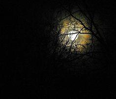 Dianebielawa's Photos - ViewBug.com - ViewBug.com