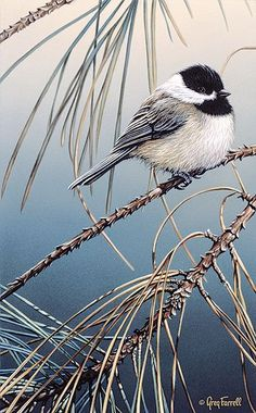 """Pine Needles - Carolina Chickadee"" by Greg Farrell"